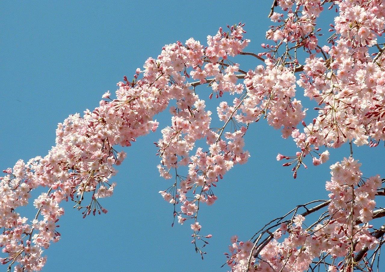 Blog - Spring Trees #10