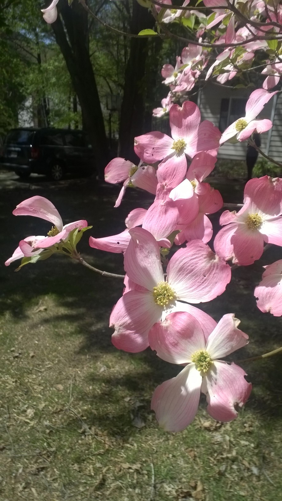 Blog - Spring Trees #13
