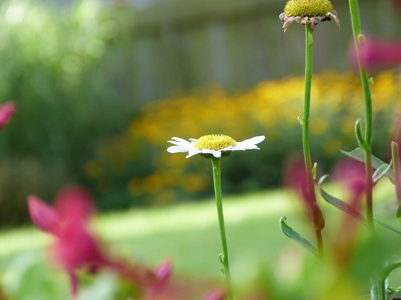 2015 July Flowers in the Garden, Blog 038