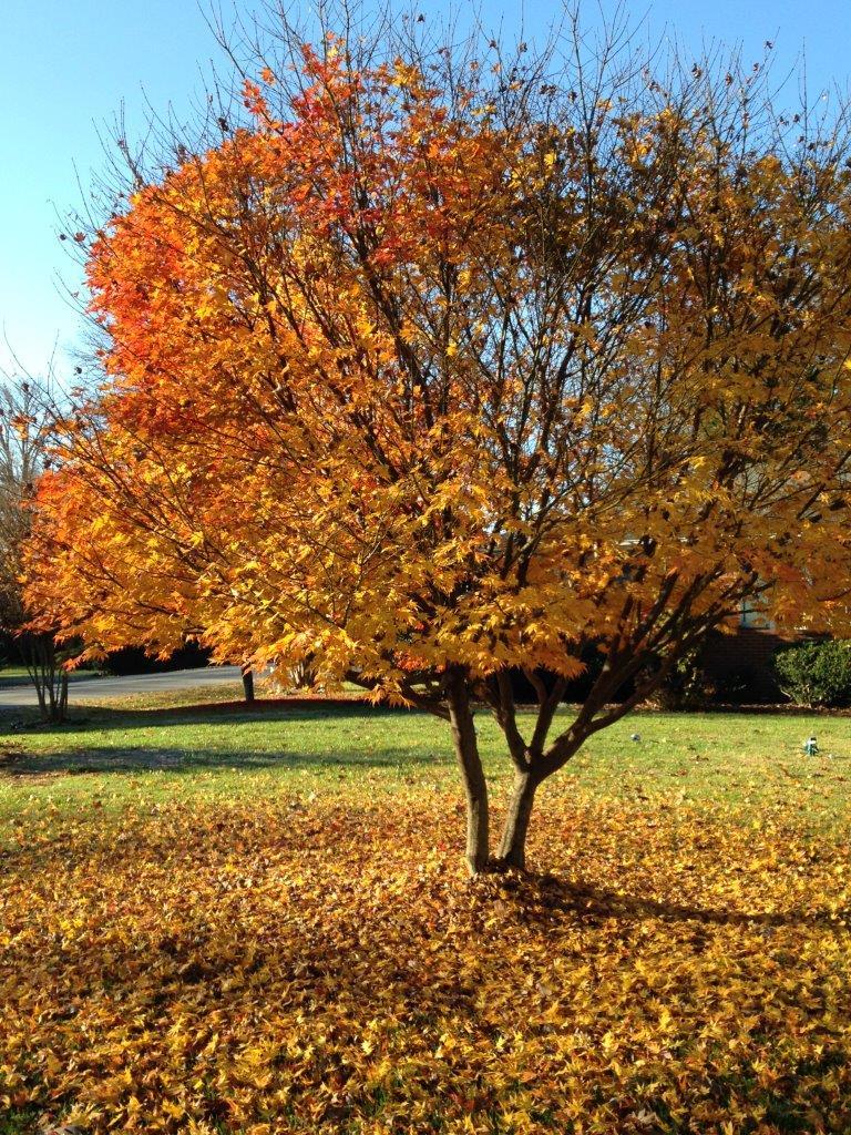 2015 December - Christmas, Retirement, Sadie, Blog, Frost 055