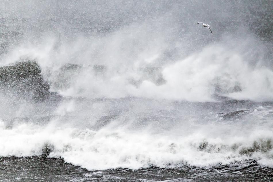 Blog - Winter Storm - gull - Theo Bosboom