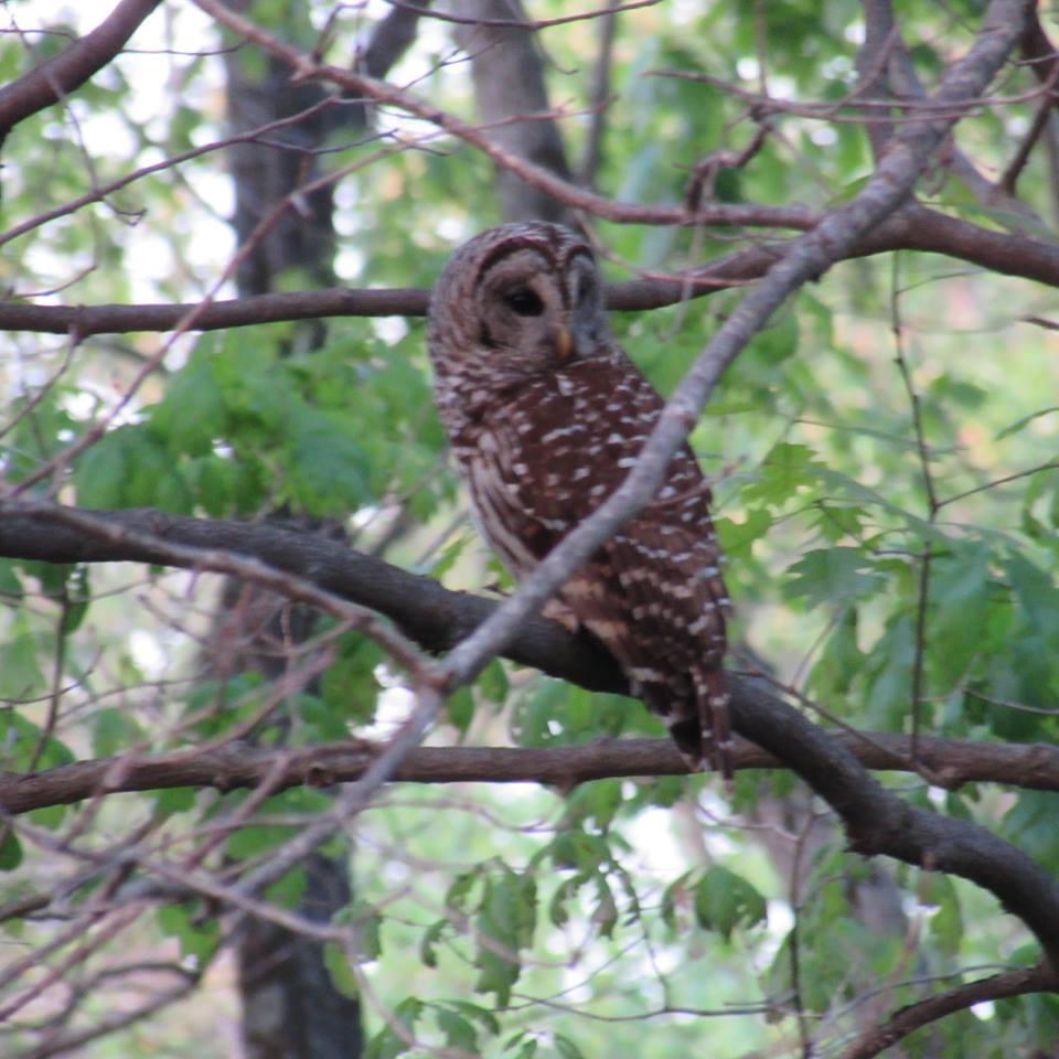 Blog - Owls - Jeanne Barney