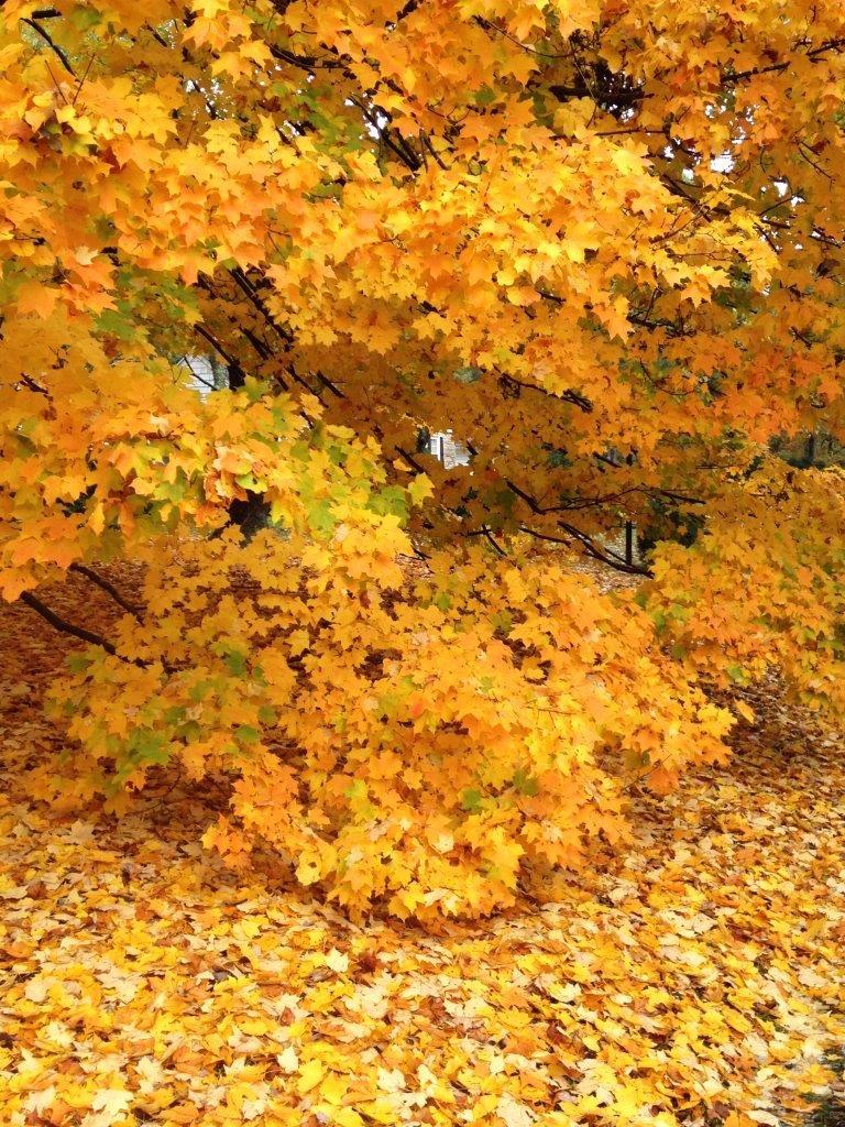 2015-october-blog-fall-trees-sadie-064